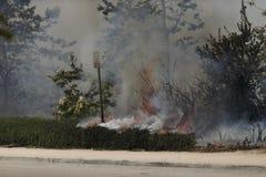 Primaveras de Forrest Fire - de Camarillo 5-2-2013 Fotografía de archivo libre de regalías