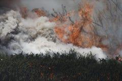 Primaveras de Forrest Fire - de Camarillo 5-2-2013 Imágenes de archivo libres de regalías