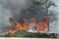 Primaveras de Forrest Fire - de Camarillo 5-2-2013 Fotos de archivo libres de regalías