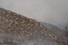 Primaveras de Forrest Fire - de Camarillo 5-2-2013 Foto de archivo libre de regalías