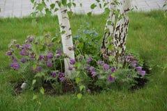 Primaveras delicadas Imagenes de archivo