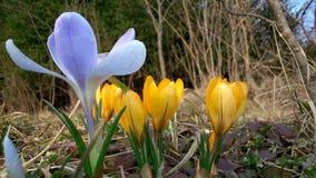 Primaveras en Crimea imagenes de archivo