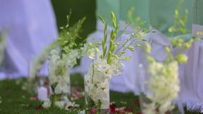 Primaveras en tazas protectoras plásticas metrajes