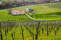 Primavere in wineyard del valdobbiadene Immagini Stock Libere da Diritti