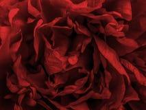 Primaverina rossa immagini stock