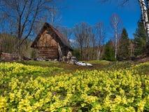 Primaverine della primavera di Kuzneck Alatau immagini stock