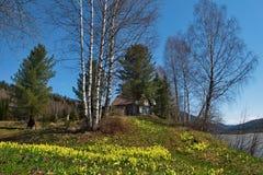 Primaverine della primavera di Kuzneck Alatau fotografia stock libera da diritti