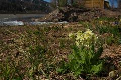 Primaverine della primavera di Kuzneck Alatau fotografie stock libere da diritti