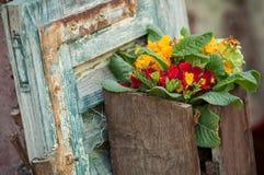 primaverine in vaso di legno vicino ad una finestra in un alsaziano t Immagini Stock