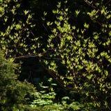 Prime foglie backlit Immagini Stock