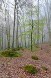Prime foglie nella foresta Immagine Stock