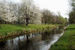 Prime foglie in primavera ai niers del fiume Fotografia Stock Libera da Diritti
