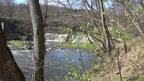 Prime foglie verdi della molla sui ramoscelli e sullo scorrimento dell'acqua della cascata 4K archivi video