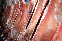 Prime Meat carcasses. Raw meat hanging in a large refrigerator Royalty Free Stock Photography