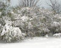Prime precipitazioni nevose della stagione Fotografie Stock Libere da Diritti