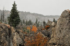 Prime precipitazioni nevose in yellowstone immagine stock