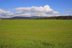 Prime Summer Grassland Royalty Free Stock Image