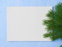 Primed cardboard for painting on the background of decorative pl. Aster and a fir branches Royalty Free Stock Images