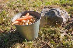 Primeira colheita Imagem de Stock Royalty Free