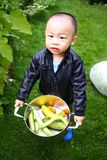 Primeira colheita do outono Foto de Stock