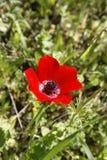 Primeira flor da mola Foto de Stock Royalty Free