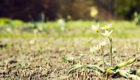 A primeira flor no prado imagens de stock