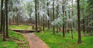Primeira geada na floresta Imagens de Stock