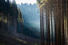 Primeira luz Imagem de Stock