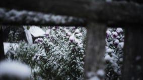 Primeira neve video estoque