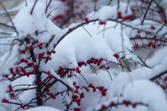 A primeira neve fotografia de stock royalty free