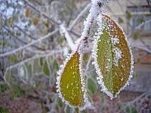 A primeira neve Fotos de Stock Royalty Free