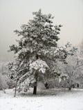 Primeira neve Fotografia de Stock