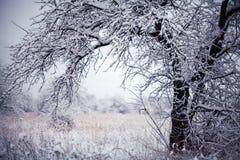 Primeira neve Imagens de Stock