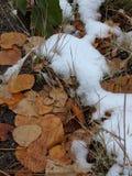 Primeira neve das quedas Foto de Stock Royalty Free