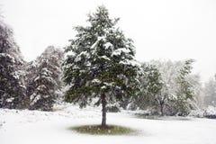 Primeira neve do inverno imagem de stock