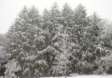 Primeira neve do inverno fotografia de stock