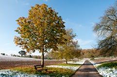 Primeira neve do inverno Imagem de Stock Royalty Free