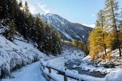 Primeira neve do tempo de inverno Fotografia de Stock