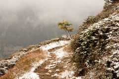 Primeira neve em alpes suíços. Tração da neve Imagem de Stock Royalty Free
