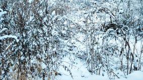 A primeira neve em novembro, grama coberto de neve na neve, em novembro a cidade do inverno Grama seca em dezembro com branco Fotos de Stock