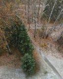 Primeira neve na floresta imagem de stock royalty free