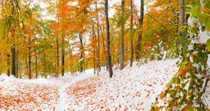 Primeira neve na floresta Fotos de Stock Royalty Free