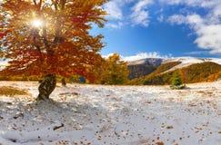 Primeira neve na floresta fotografia de stock royalty free