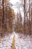 primeira neve nas madeiras Fotografia de Stock Royalty Free