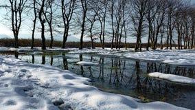 A primeira neve no bosque do carvalho imagem de stock