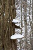 Primeira neve no fungo de prateleira fotos de stock