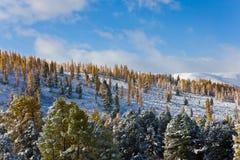 Primeira neve no outono Fotos de Stock Royalty Free