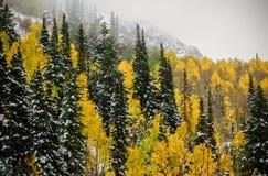 Primeira neve no Uintas imagens de stock