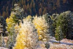 Primeira neve nos cumes Foto de Stock Royalty Free