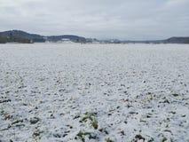 Primeira neve que cobre o campo verde Fotos de Stock